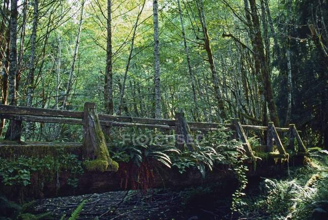 Walking Bridge In Hoh Rain Forest — Stock Photo