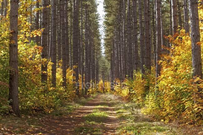 Pfad in den Wald im Herbst — Stockfoto