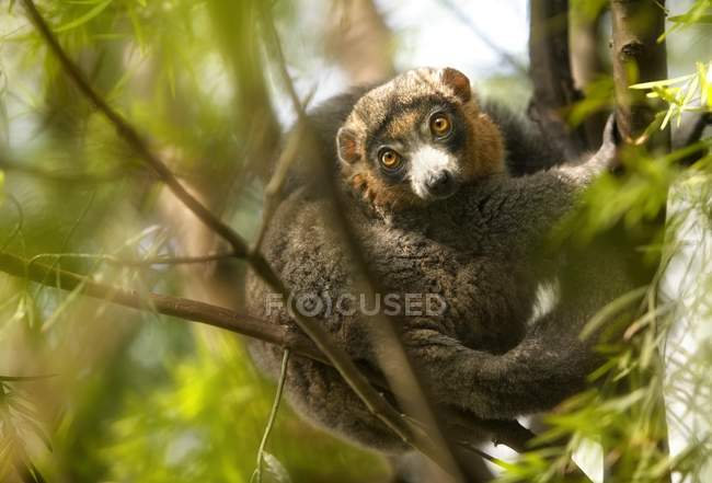 Monkey sitting In Tree — Stock Photo
