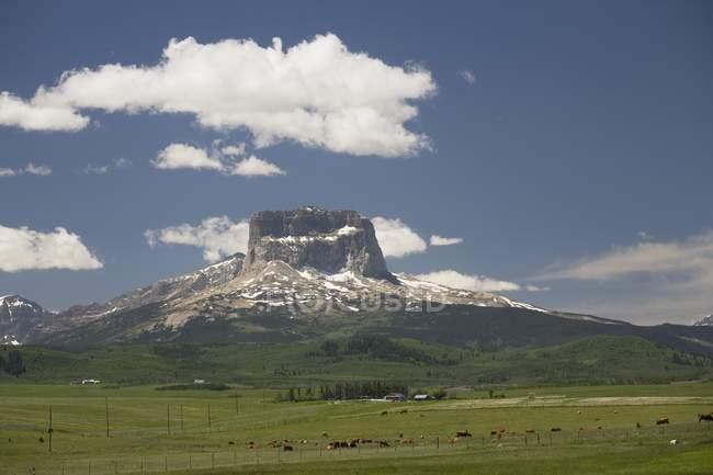 Montanha com pastagens de gado — Fotografia de Stock