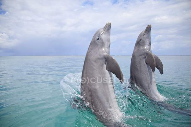 Two Bottlenose Dolphins — Stock Photo