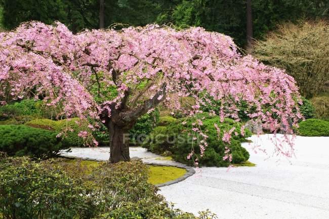 Портландский японский сад — стоковое фото