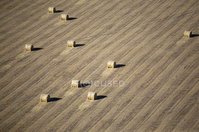 Balle di fieno In un campo raccolto — Foto stock