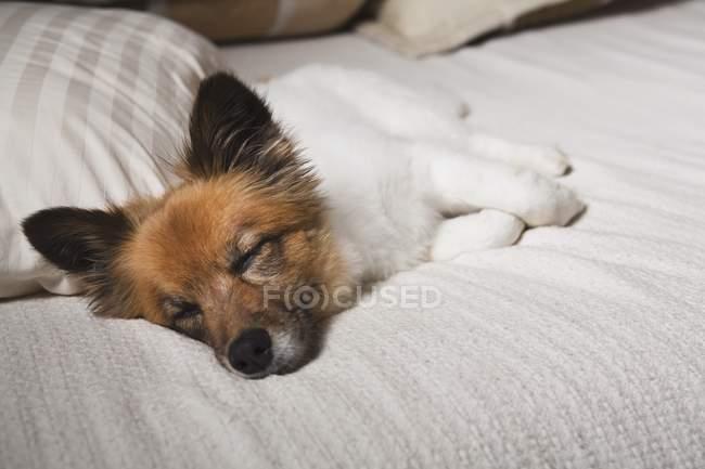 Собака спит на кровати — стоковое фото