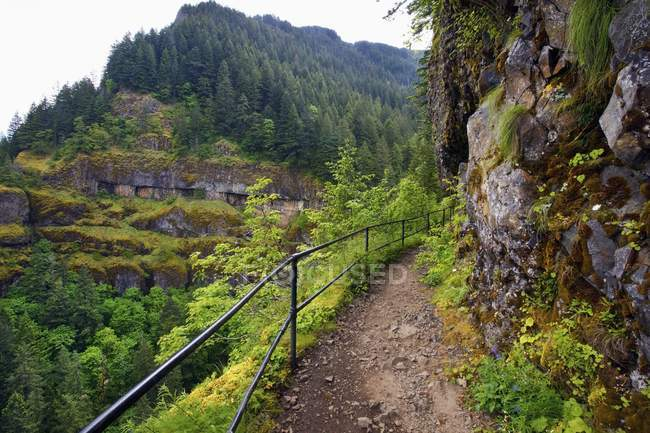 Zu den Mccord Creek Falls Trail — Stockfoto