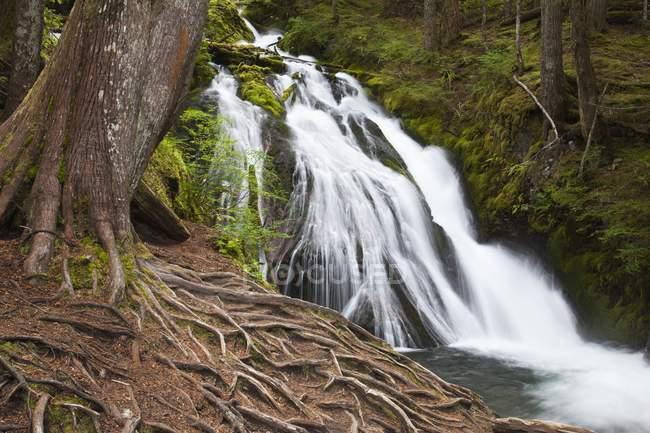 Cascada rodeada de árboles - foto de stock