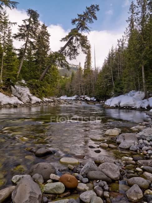 Stream, Whistler, British Columbia — Stock Photo