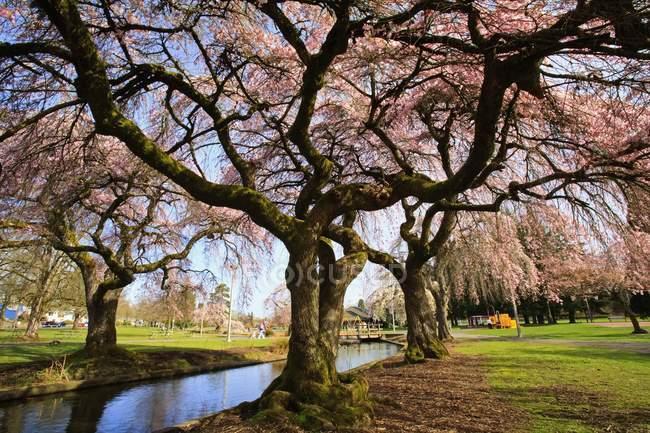 Fleurs de printemps le long du ruisseau — Photo de stock