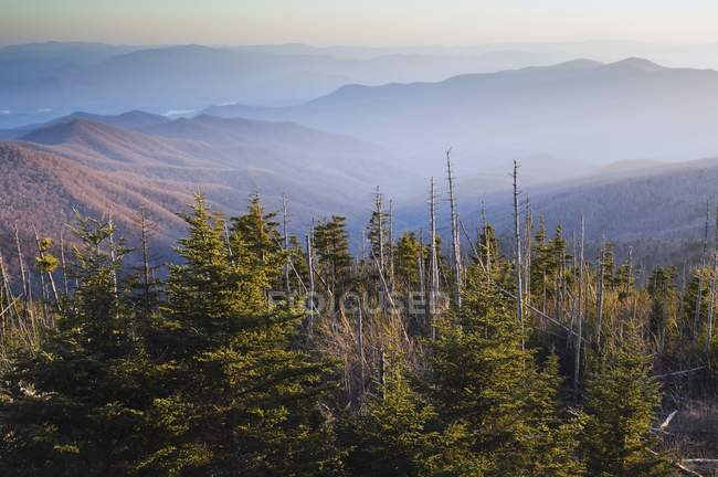 P.n. montanhas Great smoky — Fotografia de Stock