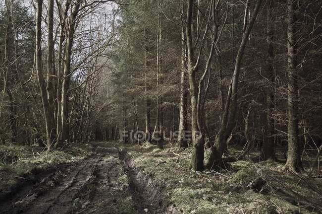 Pathway Through Woods — Stock Photo