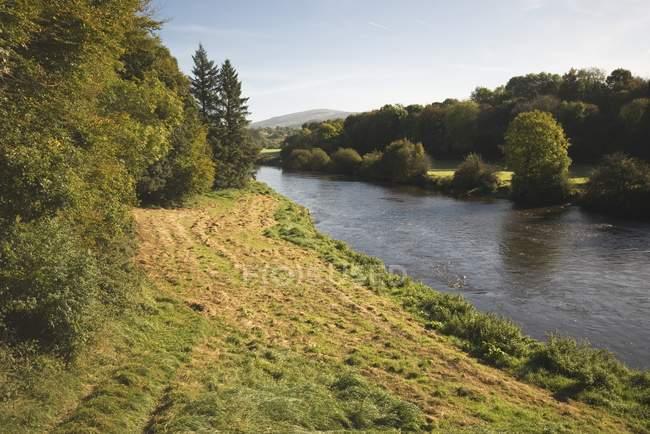 Árboles a orillas del río Nore - foto de stock