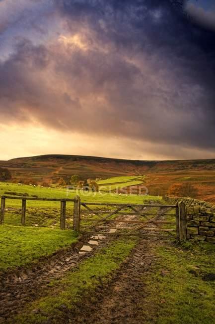 Зеленому полі з дерев'яного паркану — стокове фото