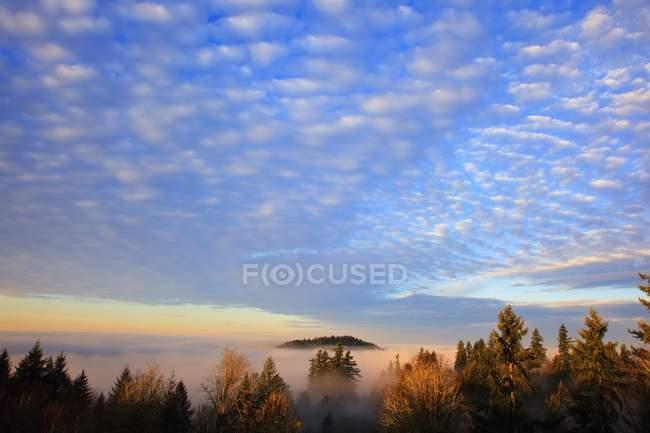 Схід сонця через ранковий туман — стокове фото