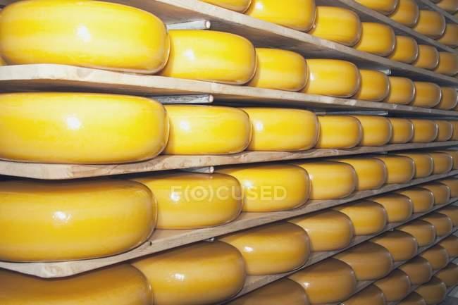 Cheese Factory, Alberta, Canada — Stock Photo