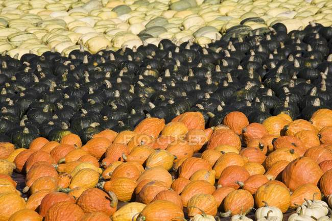 Various Colored Squash — Stock Photo