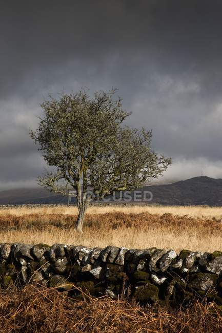 Recinzione di pietra e albero — Foto stock