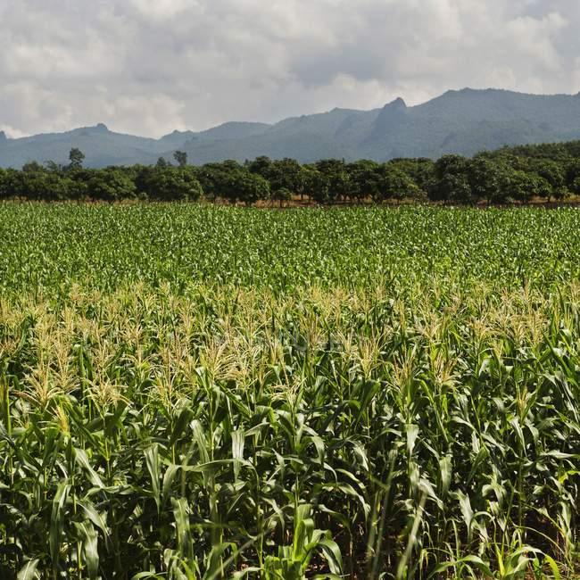 Травы и растения поле — стоковое фото