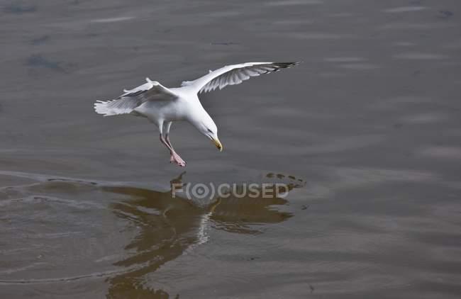 Птица, посадка на воду — стоковое фото
