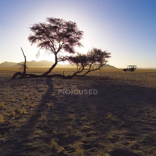 Deserto con albero sopra la sabbia — Foto stock