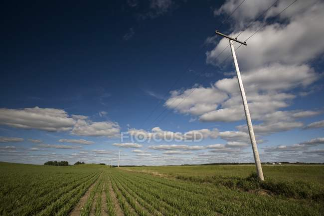 Power Lines In Prairie Field — Stock Photo