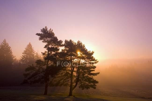 Salida del sol Detrás del árbol al aire libre - foto de stock