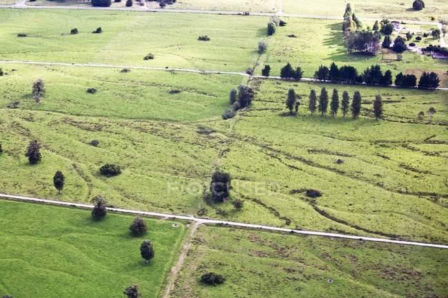 Campo verde, com árvores — Fotografia de Stock