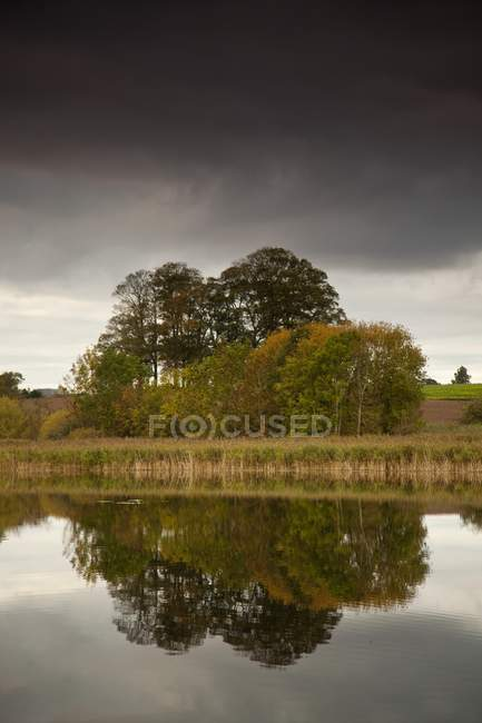 Trees on shore Reflected in Water — Stock Photo