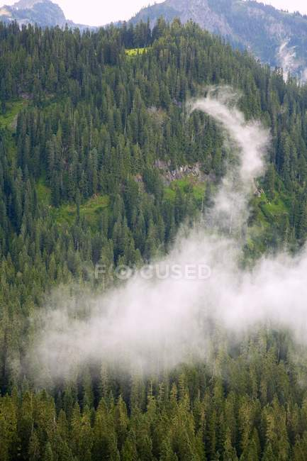 Fog On Mountainside with trees — Stock Photo