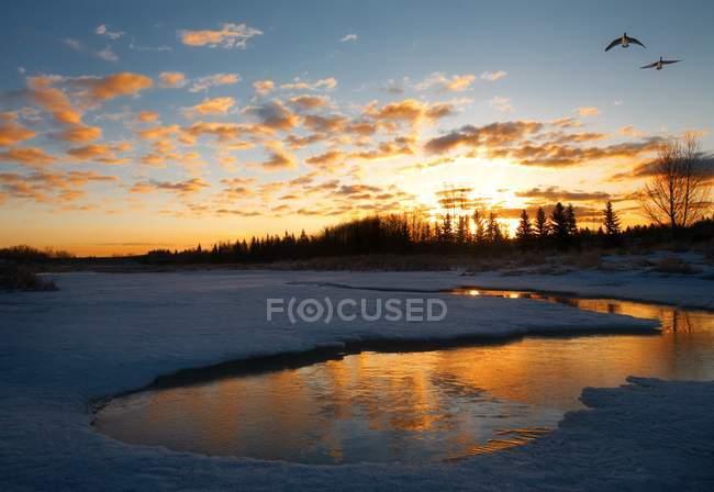 Озеро на заході сонця і птахів — стокове фото