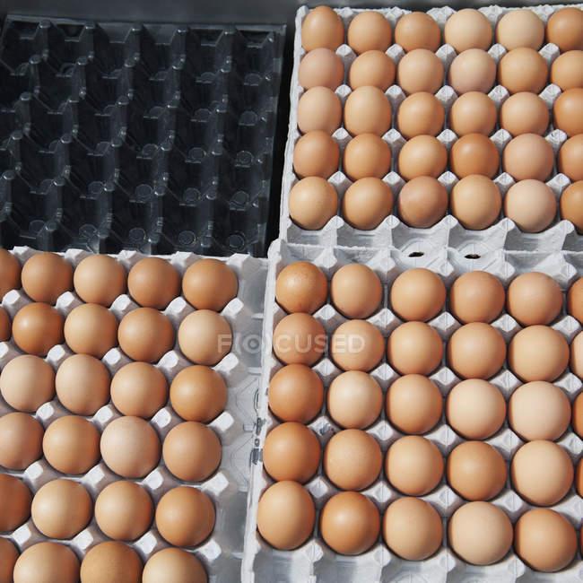 Ovos castanhos na caixa; Busan Korea — Fotografia de Stock