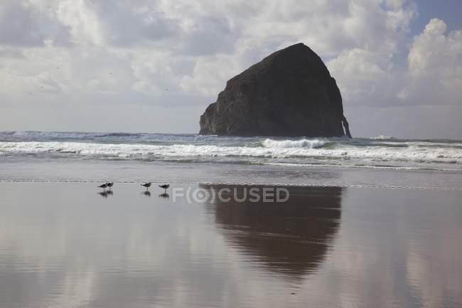 Aves en la orilla de arena - foto de stock