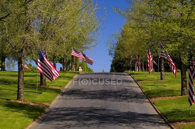 Американские флаги вдоль дороги — стоковое фото