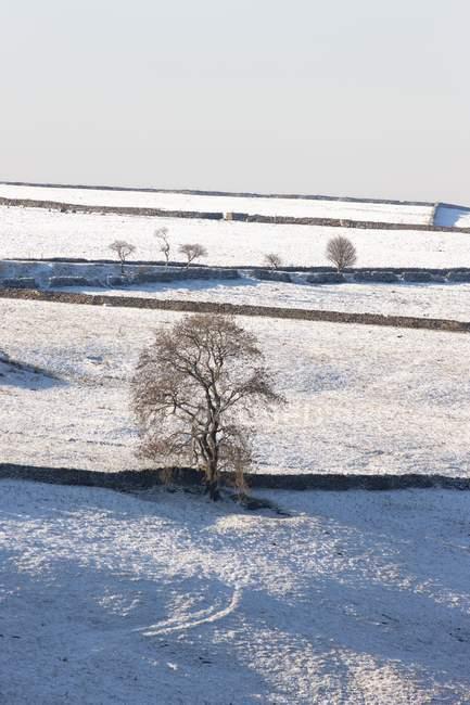 Winterlandschaft mit Schneefeld — Stockfoto