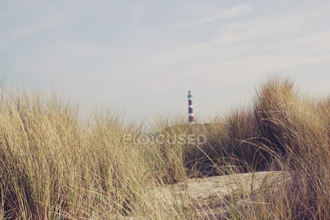 Farol passado os juncos na praia — Fotografia de Stock