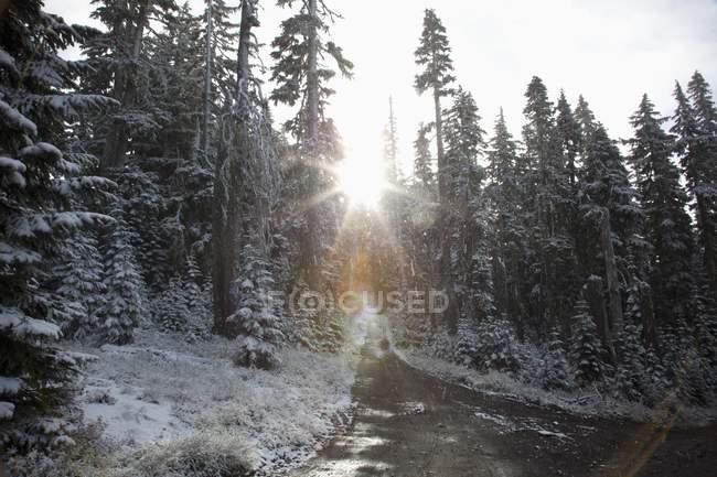Орегон, Соединенные Штаты Америки — стоковое фото