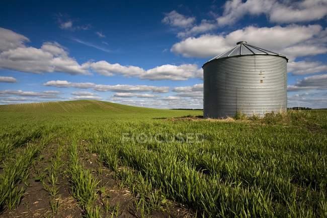 Getreide im Präriefeld — Stockfoto