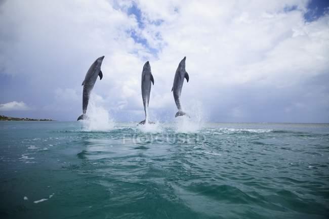 Three Bottlenose Dolphins — Stock Photo