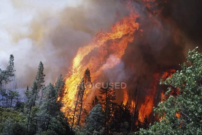 Величезний полум'я від лісова пожежа — стокове фото