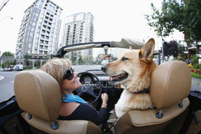Femme conduisant en cabriolet classique avec chien de compagnie à Victoria, Colombie-Britannique, Canada — Photo de stock