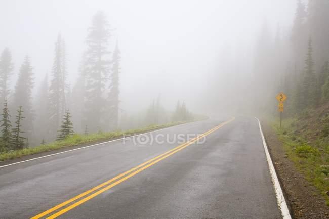 Foggy Road, Mount Rainier National Park, Washington, Сша — стоковое фото
