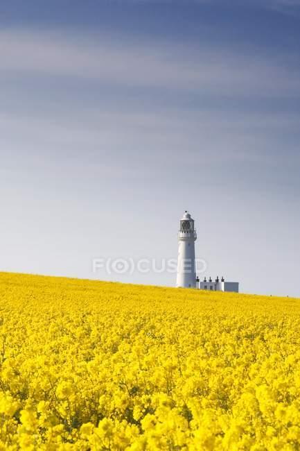 Feld mit gelben Blumen, Leuchtturm — Stockfoto