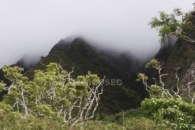 Тропических лесов, Мауи, Гавайи — стоковое фото