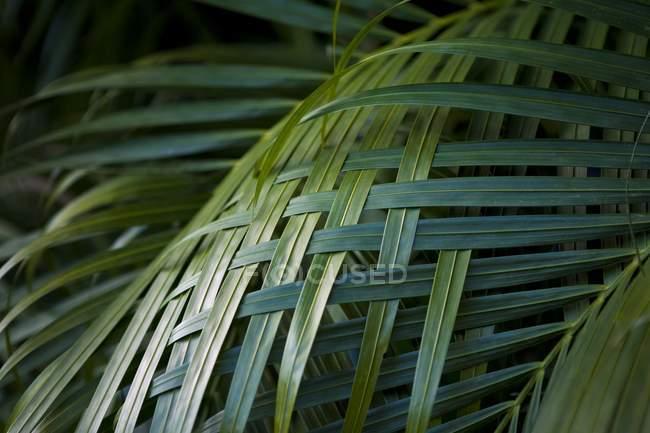 Пальмовых листьев Тканый вместе — стоковое фото