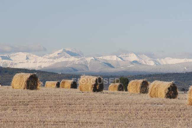 Gefrostet Heuballen im Schnitt Feld — Stockfoto