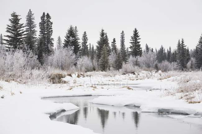 Snow Covered River Valley — Stock Photo