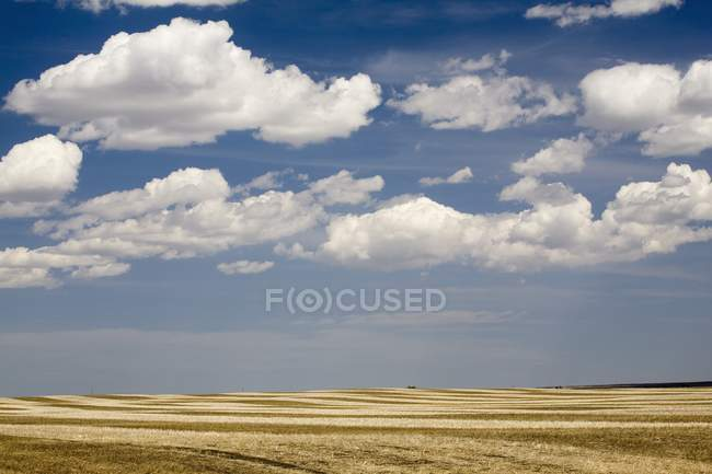 Stubble Field In Spring — Stock Photo