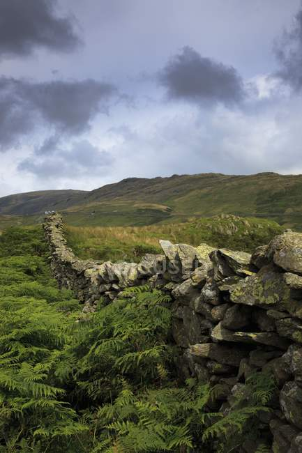 Кам'яні огорожі через поля — стокове фото