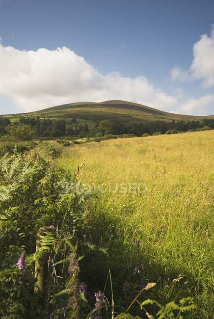 Green grass Field — Stock Photo