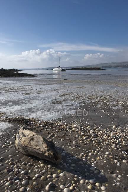 Rocas y madera a la deriva en la orilla - foto de stock