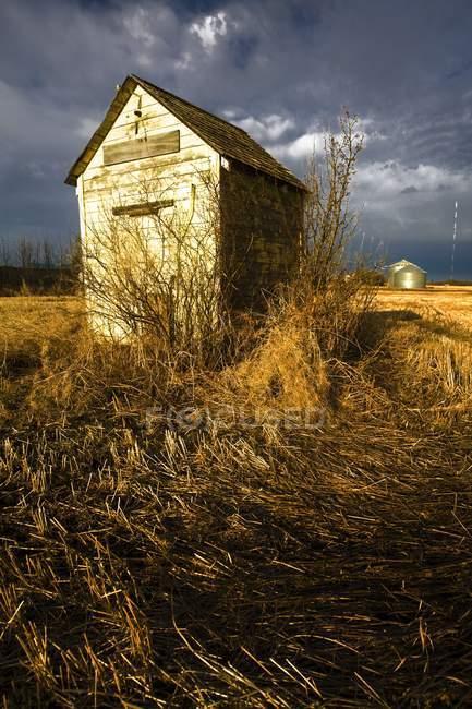 Cabana no campo, com plantas — Fotografia de Stock